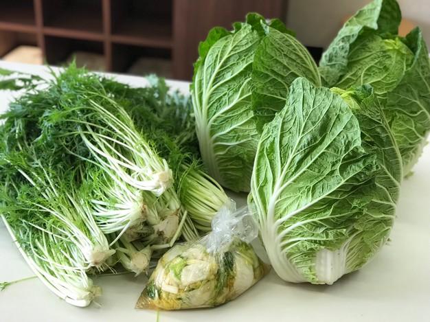 白菜 水菜